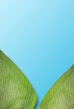 Green palm leaves colorful mockup on blue  background - 226834741