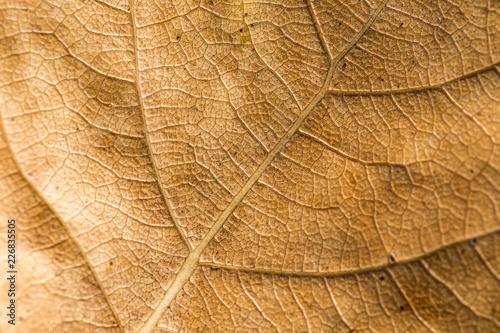 leaf - 226835505