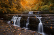 Autumn in the Siuslaw Forest, Oregon - 226845735