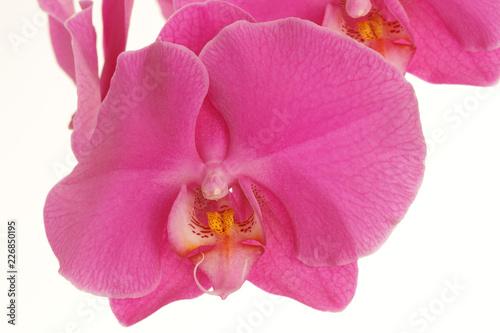 Orchidée - 226850195