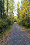 Cabin house in the end of a path during autumn. colorful trees. - 226859962