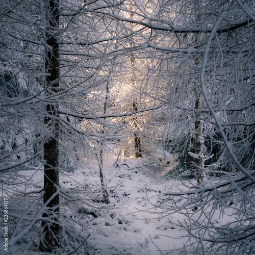 Leinwandbild Motiv Sonnenstrahlen in verschneitem Winterwald