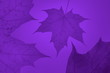 Leinwandbild Motiv autumn gold purple ultra violet background  maple leaf