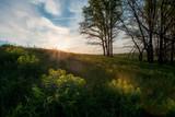 Summer landscape - 226878382
