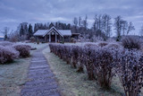 Countryside house in a frozen forest - 226879314