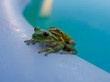 couple of frogs in a pool