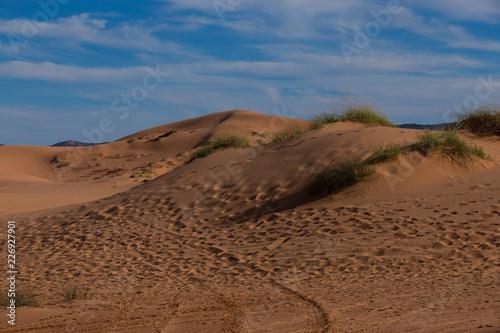 Pink Dunes of Utah