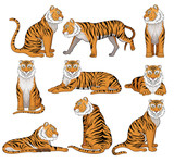 Vector set of tiger in different poses. Large wild cat with orange fur and black stripes. Powerful predatory animal. Wildlife theme