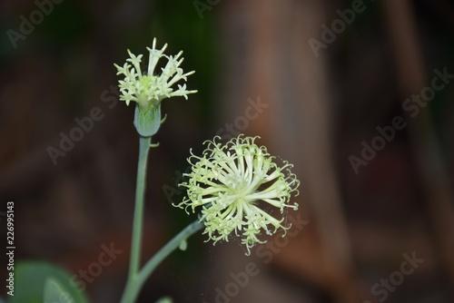 flower in garden - 226995143