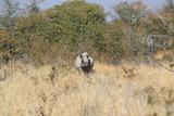 Rhinocéros en savane africaine