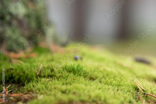 Foto Murales Fresh green moss, shallow depth of field