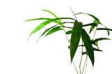 Bamboo leaves green, on a white background
