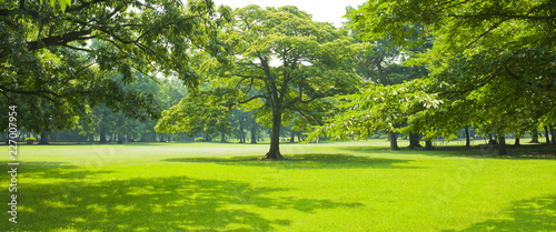 Park tree - 227007954