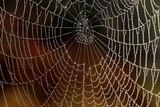 Early morning,  October. Spider web with many small  drops of water - 227032726