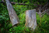 wooden log and stump in forest - 227034595