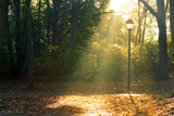 Sunlight through Trees City Park Berlin, autumn forest - 227035143