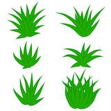 Set of succulent plant, bush, flower isolated on white background. Vector illustration. - 227048328
