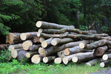 wooden logs store - 227053357