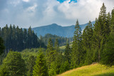 mountain landscape with forest - 227053386