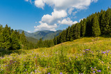 flowers mountain meadow - 227053521