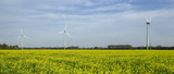 Field of flowering rapeseed, oilseed. Windmill, green energy. Windenergy