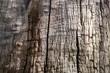 Tree bark horizontal