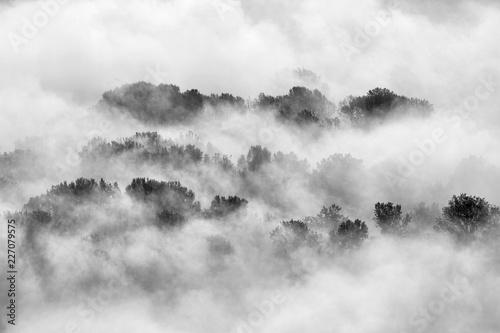Nebbia sulla foresta, Italia - 227079575