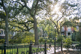 Bright scenic view of green parkland with sun shining through Spanish moss in Savannah, Georgia