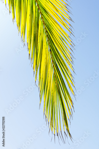 Foto Murales palm trees branches in tropical beach