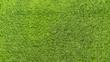Green grass texture background. View above.