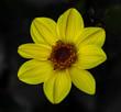 Gelbe Blüte im Detail