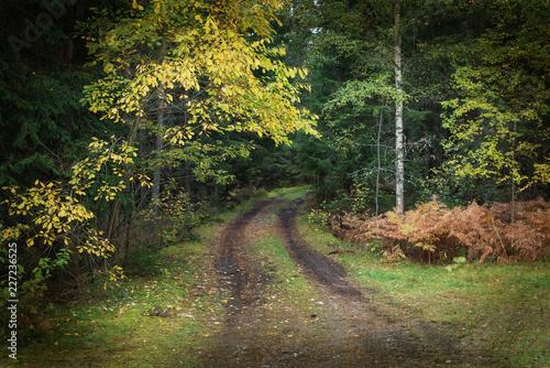 Grunge forest background - 227236525