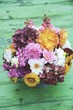 Leinwanddruck Bild - Grußkarte -  Blumenstrauß mit Dahlien - Herbststrauß