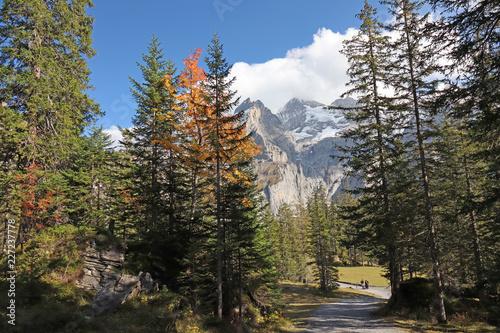 Wanderweg zum Oeschinensee bei Kandersteg, Alpen, Schweiz - 227237778