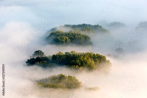 Mgły w lesie o świcie