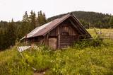 Fairy forest house - 227242388