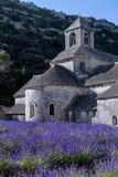Abadia de Senanque and its lavender field. France