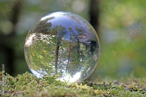 wald in kristallkugel, alpen, schweiz