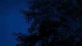 Tree In The Wind At Night - 227256513