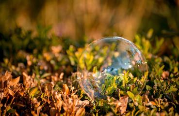 soap bubble, settled on a Bush