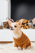 close up view of chihuahua dog in sweater with fireplace behind