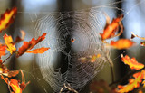 web in autumn forest - 227290511