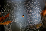 dew on spider web in forest - 227290525