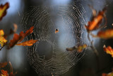 spider web in forest - 227290532