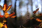 web in autumn forest - 227290540