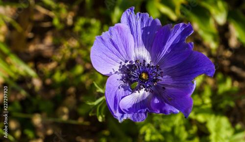 Macro anemone - 227297920