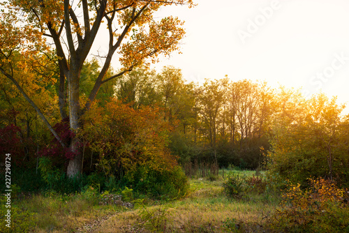 Yellow woods in autumn forest
