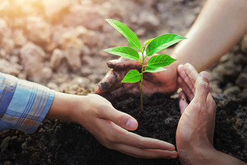 farmer three hand protection tree planting on soil with sunshine in garden