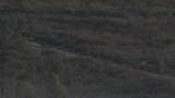 Wild wolfs pack walking, ultra long distance shot - 227308907