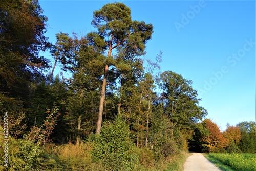 Foto Murales Herbstlandschaft/Wald/Wolken/Blätter